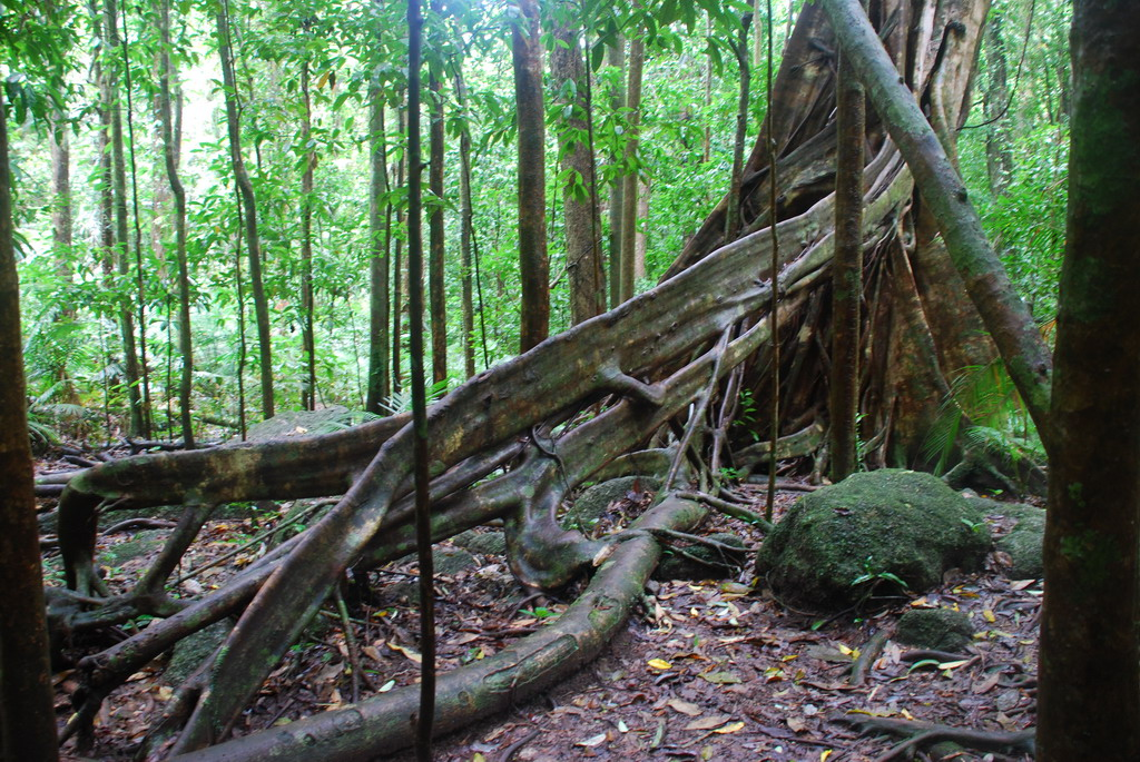 daintree热带雨林